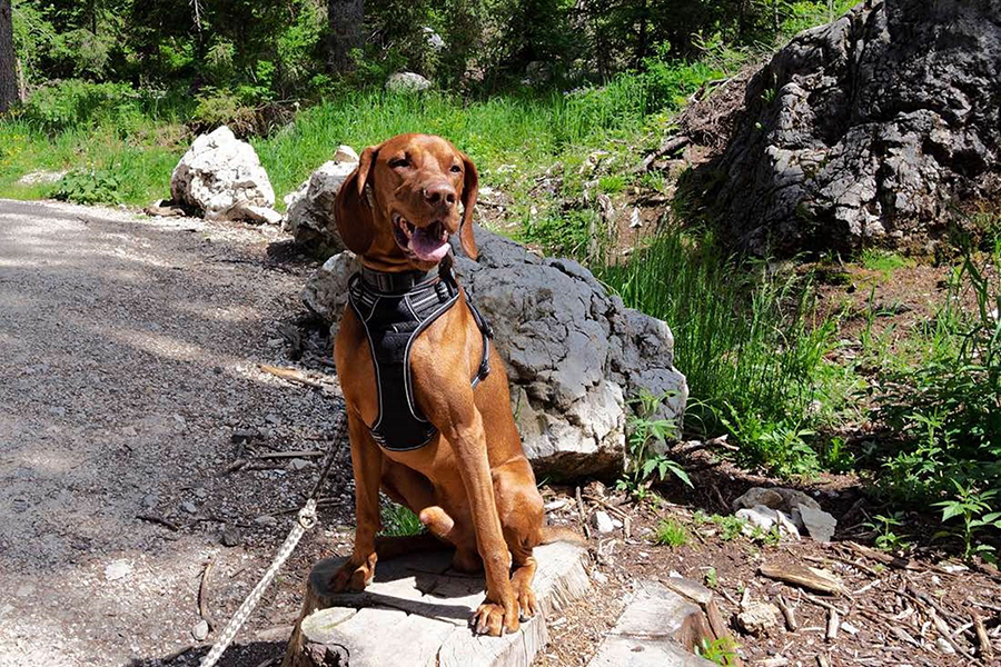 Hellbrauner Hund sitzt am Wegesrand, umgeben von grüner Natur